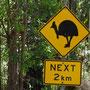 Achtung: Cassowary