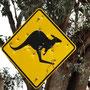 Da war wohl einer sauer ein ein Känguruh