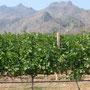 Ausserhalb des National Parks hat es - erstaunlicherweise - ein Weingebiet