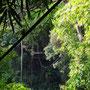 Ziplining in einer wunderschönen Natur