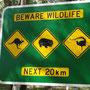 Auf dem Weg in den Mount Buffalo National Park. Achtung: Känguruhs, Wombats und Lylebirds (Leierschwanz)