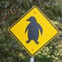 Pinguine haben wir leider keine gesehen.