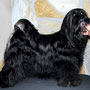 Queen-Neeh of Dog´s Wisdom von Lighten_8,5 Jahre (years) 01.2012