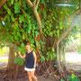 wunderschöner Baum im ehem. Yachtclub von Tahaa