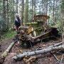 Überreste von Holzfällerarbeiten