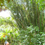 Bambuswald auf Ilha Grande