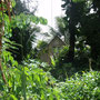teilweise üppige Vegetation auf Mangareva