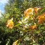 Blütenpracht trotz Winter
