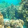Unterwaserwelt von Bora Bora
