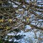 auch hier bereits Frühling