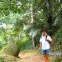 Urwald auf Ilha Grande