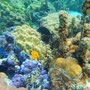 Unterwasserwelt von Boraa