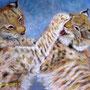 """Anne BOUR  """"Des petits lynx""""   pastel sec      65 x 50"""