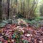 in Natura sah es aus wie ein Grab mit Pilzen obendrauf