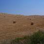 Moisson en campagne Toscane
