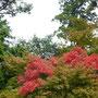 2013年11月 北鎌倉の紅葉