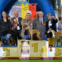 30.09.2012: Int. Bergamo (BG): Junior CLass - 1° EXC - JBOB - Best Female - BOB - 2° BOG - Alberto Lamperti (IT) & Gianercole Mentasti (IT)