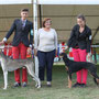 14.10.2012 Koper II (SLO): Junior Class - 1° EXC - JBOB - Best Female - BOS - Monica Blaha (A)