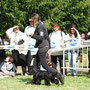 18.04.2010 Albenga (SV): Puppy Class - 1° VP - Best Puppy - Bauchal Gianfranco (IT) - 2BIS Puppy