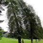 Kandy Botanic Garden Peradeniya Sri Lanka