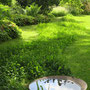 Vögel-Pool