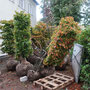 Pflanzenlieferung ...