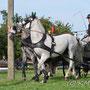 ....unmittelbar am Storchennest sind sich Fahrer und Pferde nicht ganz einig...