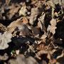Feuilles mortes - Photo Anne Lavorel