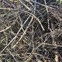 Tas de branches - Photo Anne Lavorel