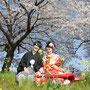 桜と菜の花のコラボがとってもキュート