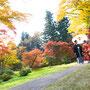 紅葉の中、お二人でお散歩