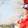 弧を描く桜は迫力満点
