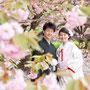 八重桜で和装撮影
