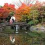 中央公園の見事な紅葉で撮影