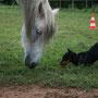 15 Wochen - Die erste Begegnung mit dem Pferd