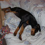 18 Wochen - Devil schläft am liebsten in Blues Bett