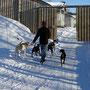 Spaziergang mit Loke, Spike, Blue und Devil - die tollsten Hunde die es bei Sollia gibt!