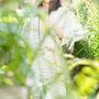 ヤマトインターナショナル「BEIGEGE CROCODILE summer」 2010