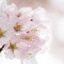 「今を春辺と…」