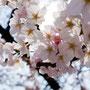 「四月の透過光」