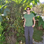 Wilde Rhabarber als Sonnenschirm
