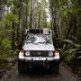 Dichter Walder im Nationalpark Pumalin