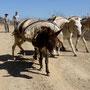 Ein Spaziergang mit Esel in La Higuera