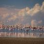Lagunas Pozuelos mit über 10'000 Flamingos