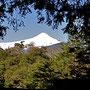 Sicht auf den Vulkan Villarrica auf der Wanderung im N.P. Huerquehue