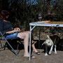 Erlebnisbauernhof mit jungen Hunden und, und...