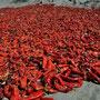 Chilis werden getrocknet