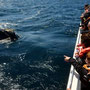 Bartenwal-Junges neugierig beim Boot