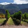 Höchste Weinberge der Welt (über 3000 M.ü.M)
