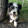 Zacarias, der Campinghund und Zugleich Passwort zum Internet ;-)